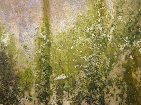 Mold Mitigation & Remediation